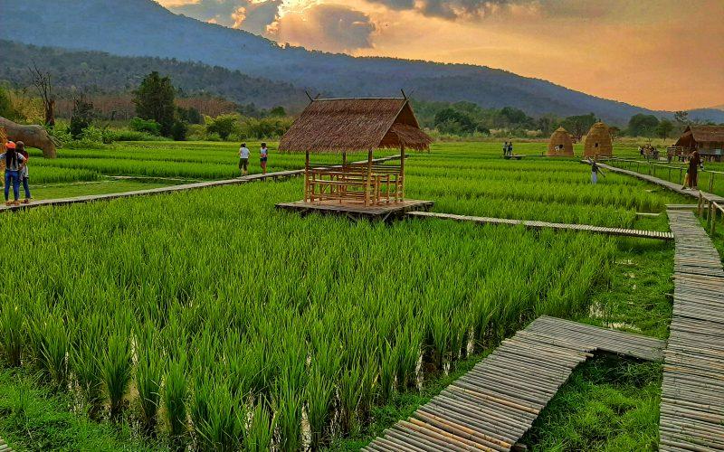 Quoi faire à Mae Rim – province de Chiang mai - Thaïlande