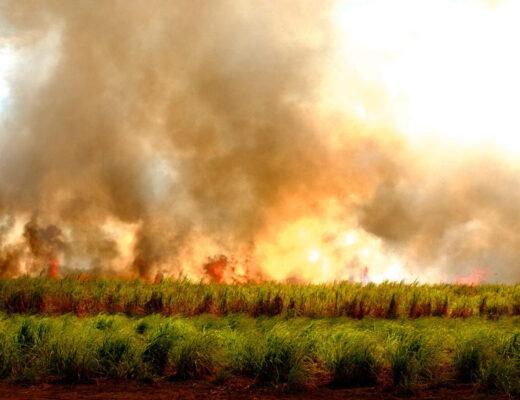 les brûli en thaïlande
